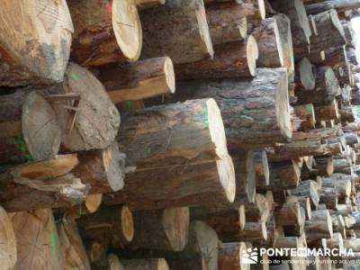 Apilamiento y aprovechamiento de madera - club senderismo; madrid nieve